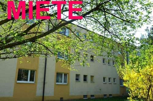 Sonnige Mietwohnung Nähe Zentrum Pressbaum