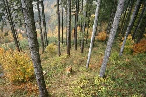 19 ha gut erschlossener Wald - Ennstal nahe Altenmarkt bei St. Gallen