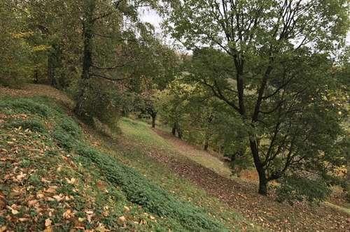 +++ TRAUMHAFT +++ 8.000 m² Grundstück mit liebevoll erbautem Landhaus ++ BIO-Garten ++ Echte Grün-Ruhe-Oase nähe Forchtenstein +++