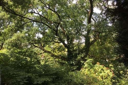 Außergewöhnliches riesengroßes Naturparadies