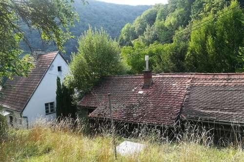 Abbruchhaus auf sehr großem Grundstück inmitten der Natur in Urfahr