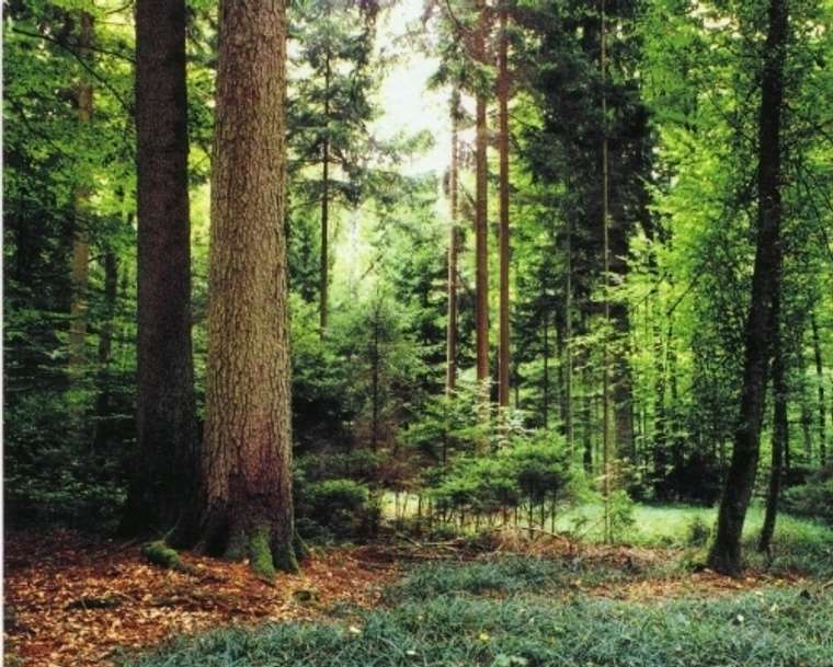 Waldgrundstück waldgrundstück in seekirchen