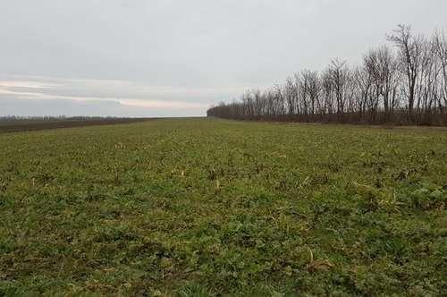 Ackerfläche im Bezirk Mistelbach - Privatverkauf - keine Maklerprovision