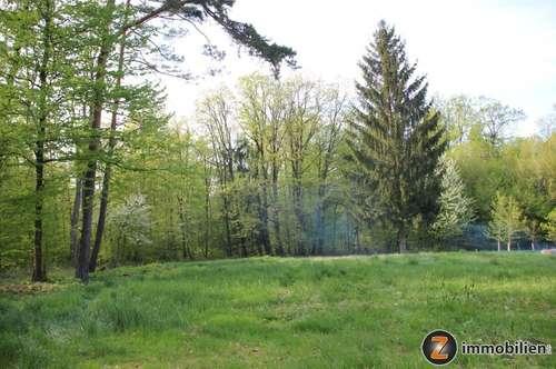 Herrlich gelegenes Grundstück mit Wald, Wiese und Bauland