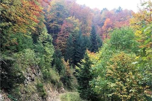 Wald 4,7 ha und 13 ha, Völkermarkt Luschasattel, ideal für Nautrfreunde oder Jäger