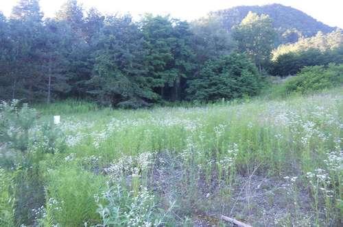 Pischeldorf-Baugrund in traumhafter Ruhelage, Waldrandlage, sonnig