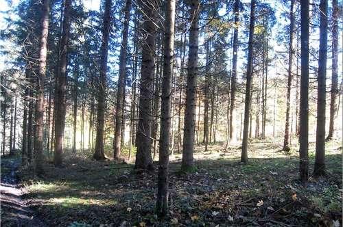 Wald 2,6 ha, Gallizien Kärnten