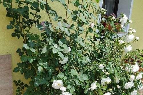 Wohnen mit wunderschöner Gartenidylle - Wohlfühlen pur!