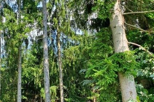 Kleinwald nähe Fischbach