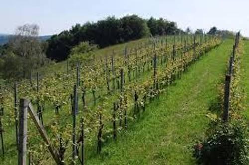 Krems, :  Betreutes  Weingartl  in Aussichtslage