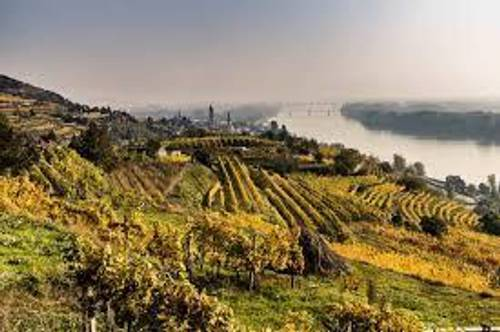 Krems - Wachau-:  Herrlicher Garten mit Göttweigblick  Weingarten und  Freizeit