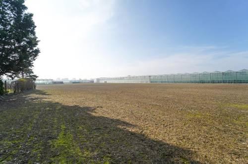 Landwirtchaftliches Grundstück in Simmering | fruchtbarer Boden