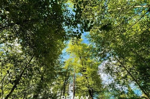 Waldgrundstück in Laßnitzhöhe zu kaufen!