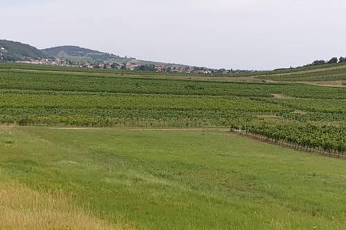 2511 Pfaffstätten - Weinstraße - Riede Schönkirchen - Thermenregion: Hier muss man einen Weingarten haben!