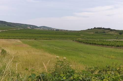 P&P: 2511 Pfaffstätten - Weinstraße - Riede Schönkirchen - Thermenregion: Hier muss man einen Weingarten haben!