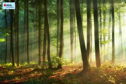 In Grund und Boden investieren! Waldgrundstück in Bischoffeld - Gaal
