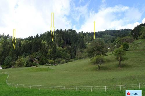 Waldfläche im Lavanttal