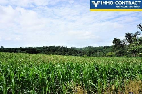 <b>Landwirtschaftliche Fläche - Äcker, Wiesen u. Wald</b>