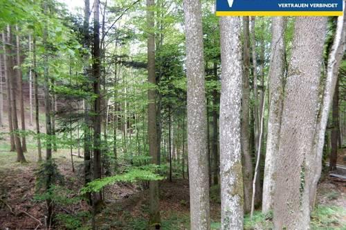 <b>Forstwirtschaft - Mischwald - guter Bestand</b>