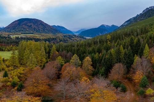 NEUERLICHE Preisreduktion!!! Wald