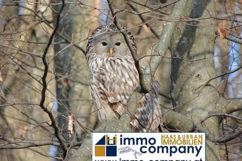 9071 Köttmannsdorf: 4,6 ha Wald!!!