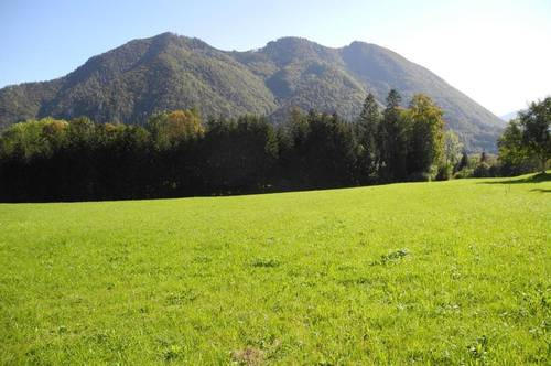 Hübsche Wiese mit kleinem Wald - KEIN Baugrund