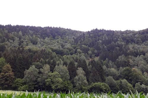 Waldparzelle - Millstättersee 7 ha mit hiebreifen Holzbestand
