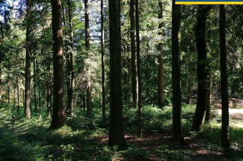Top gepflegter 90-100 jähriger Wald