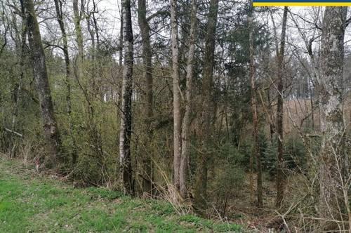 Arrondierte Waldfläche