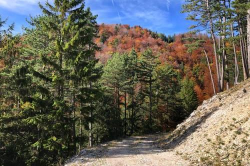 Wald im Piestingtal zu verkaufen