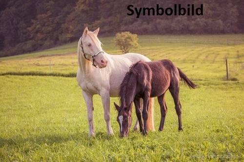 Zwei Landwirtschaften stehen zum Verkauf - gegeignet auch für Pferdehaltung