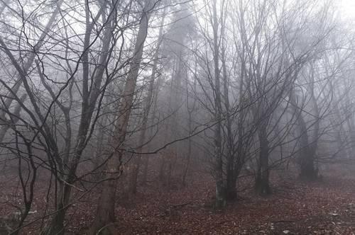 Waldparzelle nähe Globasnitz 4,6 ha