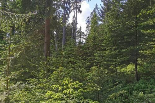 23 ha Wald Unterkärnten