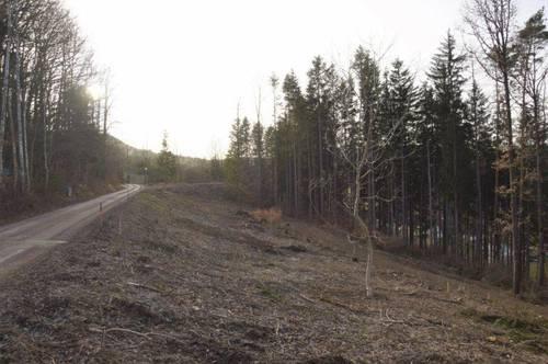 Als würde man im Wald leben