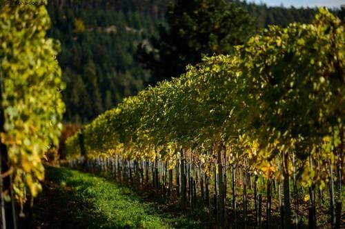 Wein-Bauernhof inkl. Technik/Geräte und ca. 6,5 ha Wein-Anbaufläche