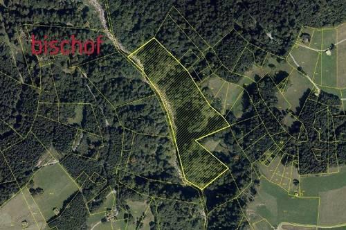 Forstwirtschaftliche Fläche zu verkaufen