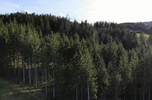Gepflegter Wald in Steyr Land!