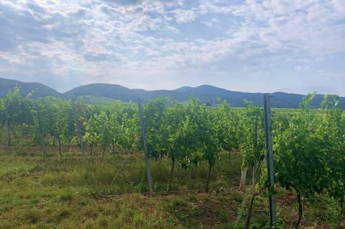 Renommiertes Weingut in Thermenregion
