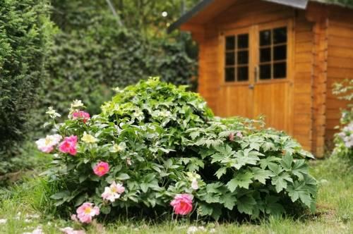 Gartentraum - wie im eigenen Haus...