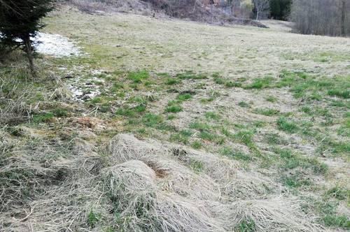 Landwirtschaftliches Grundstück, sonnige Lage