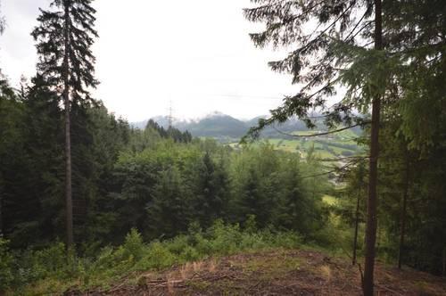 8650 Kindberg: Waldgrundstück / Mischwald