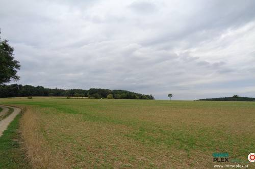 Nähe Maissau - Ackerland - im nördlichen Niederösterreich zu kaufen!