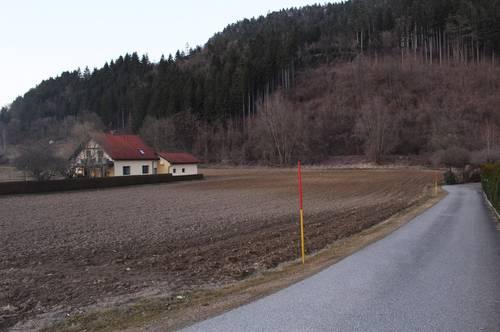 Grossflächiges Bauland mit Potenzial (3129)