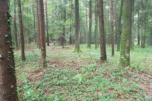 Waldgrundstück - Erholung am Rande von Graz