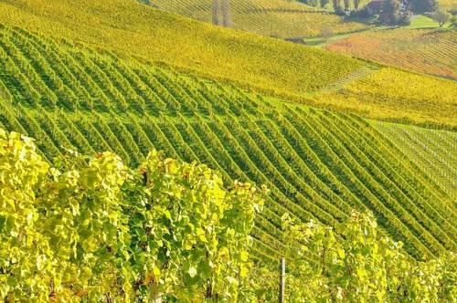 Exklusives Weingut - Ferienhäuser - Buschenschank - in Alleinlage Weinstraße/Südsteiermark