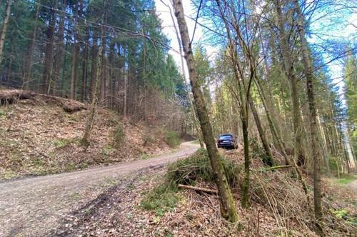 Großes Waldgrundstück in Gratwein-Straßengel