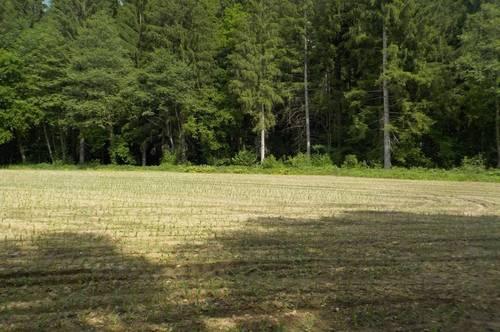 1658 m² Baugrundstück und Acker und Wald