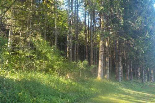 9422 Maria Rojach  Wald mit gutem Bestand