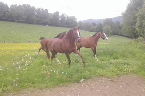 Alleinlage für Pferdeliebhaber und Ruhesuchende, Bauernhof mit 15 ha Grund im Naturpark Gurktal