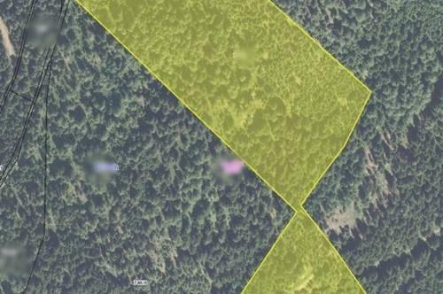 6,5 ha Waldparzelle mit 20 bis 70 jähriger Bestand